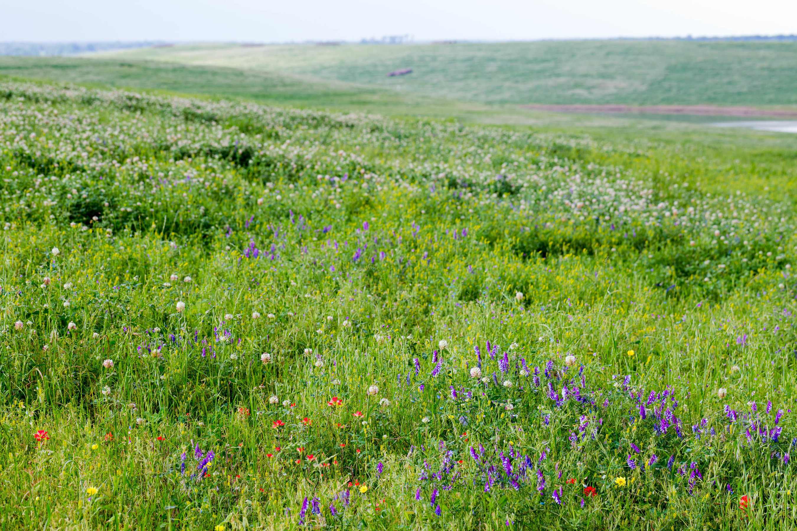 Wildflowers bloom on the rolling hillsides of reclaimed land at Sandow Lakes Ranch.