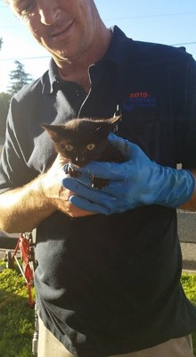 Sacramento Roto-Rooter Plumber Heroically Saves Helpless Kitten Trapped in Drain