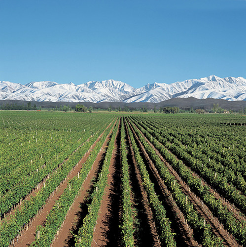 The Alamos vineyards near the Andes Mountains in Mendoza, Argentina.  (PRNewsFoto/Alamos Wines)