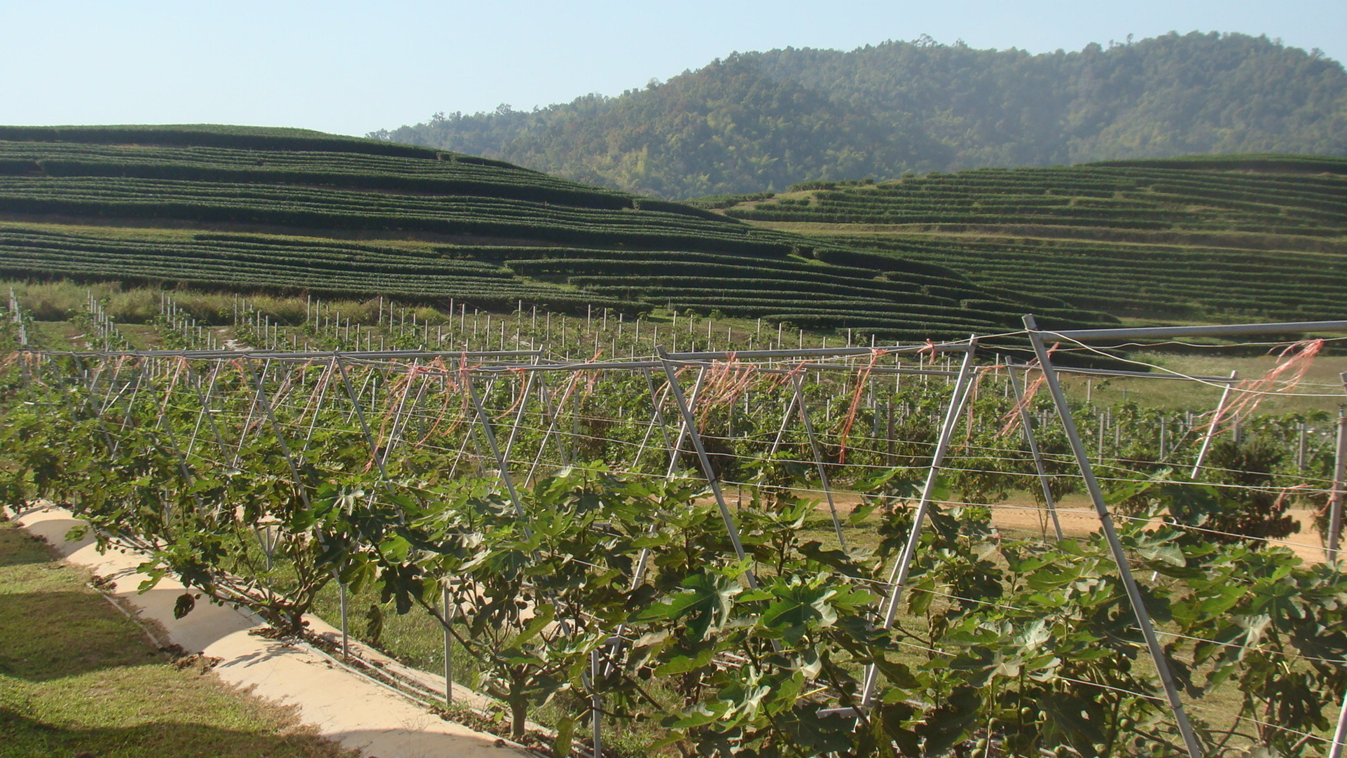 Singha Park -- ein soziales Projekt, um Bauern im Norden Thailands zu unterstützen