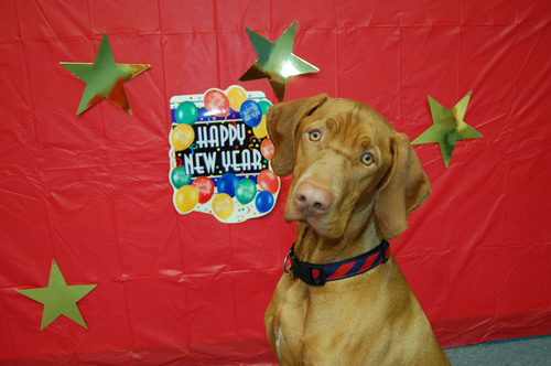 Jack gets his souvenir photo taken at the Yappy New Year Party hosted by Club K-9 Doggy Daycare in Centerville Ohio.  (PRNewsFoto/Club K-9 Doggy Daycare)