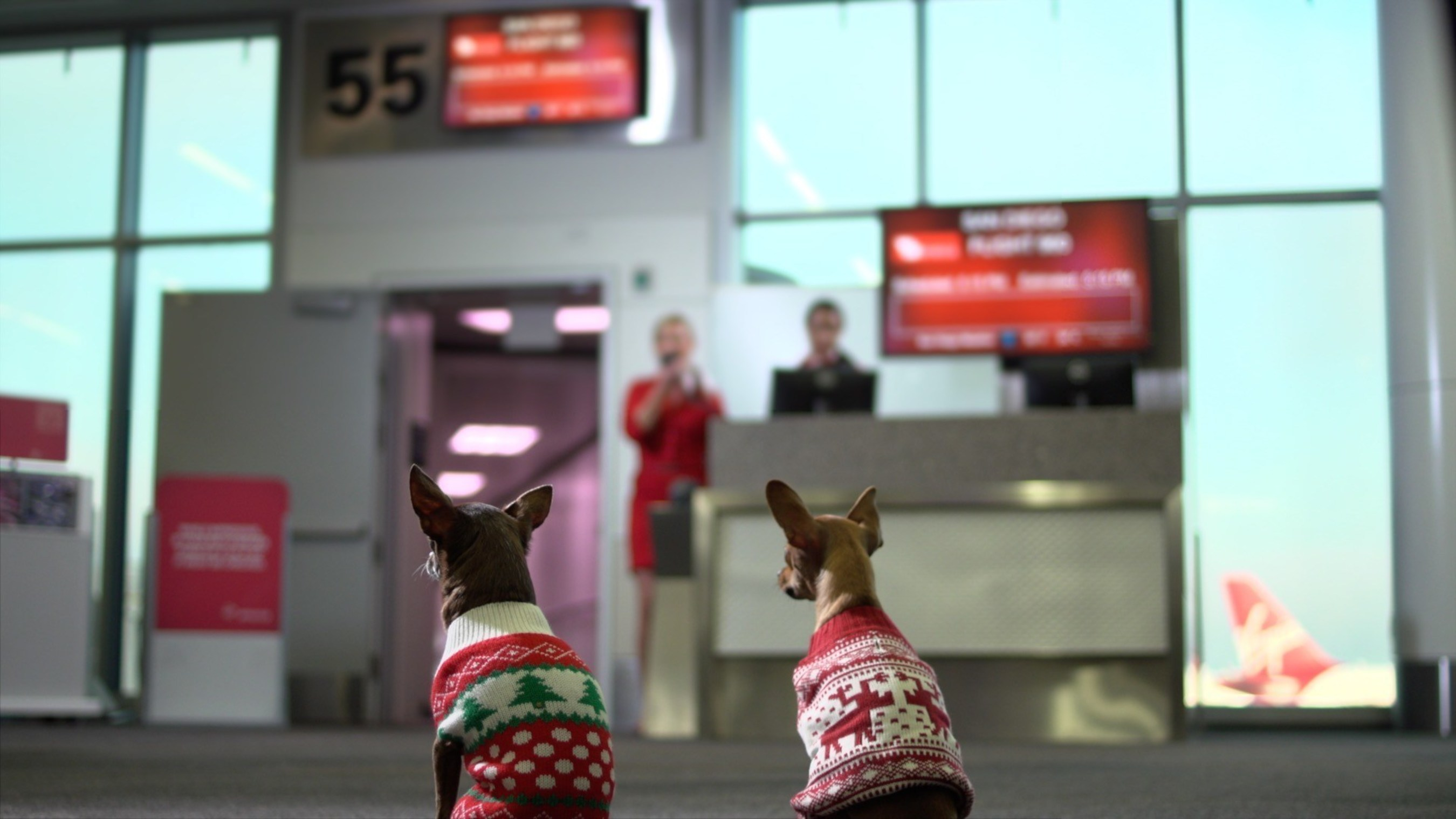 VIRGIN AMERICA UNLEASHES #TINYDOGSTINYFARES CYBER MONDAY DEAL AND OPERATION CHIHUAHUA AIRLIFT