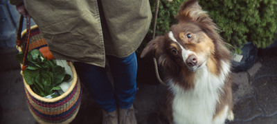 A recent survey by Petcurean Pet Nutrition - makers of GO! premium pet food - finds 83% of American pet owners will be celebrating National Pet Month (April). (PRNewsFoto/Petcurean) (PRNewsFoto/PETCUREAN)