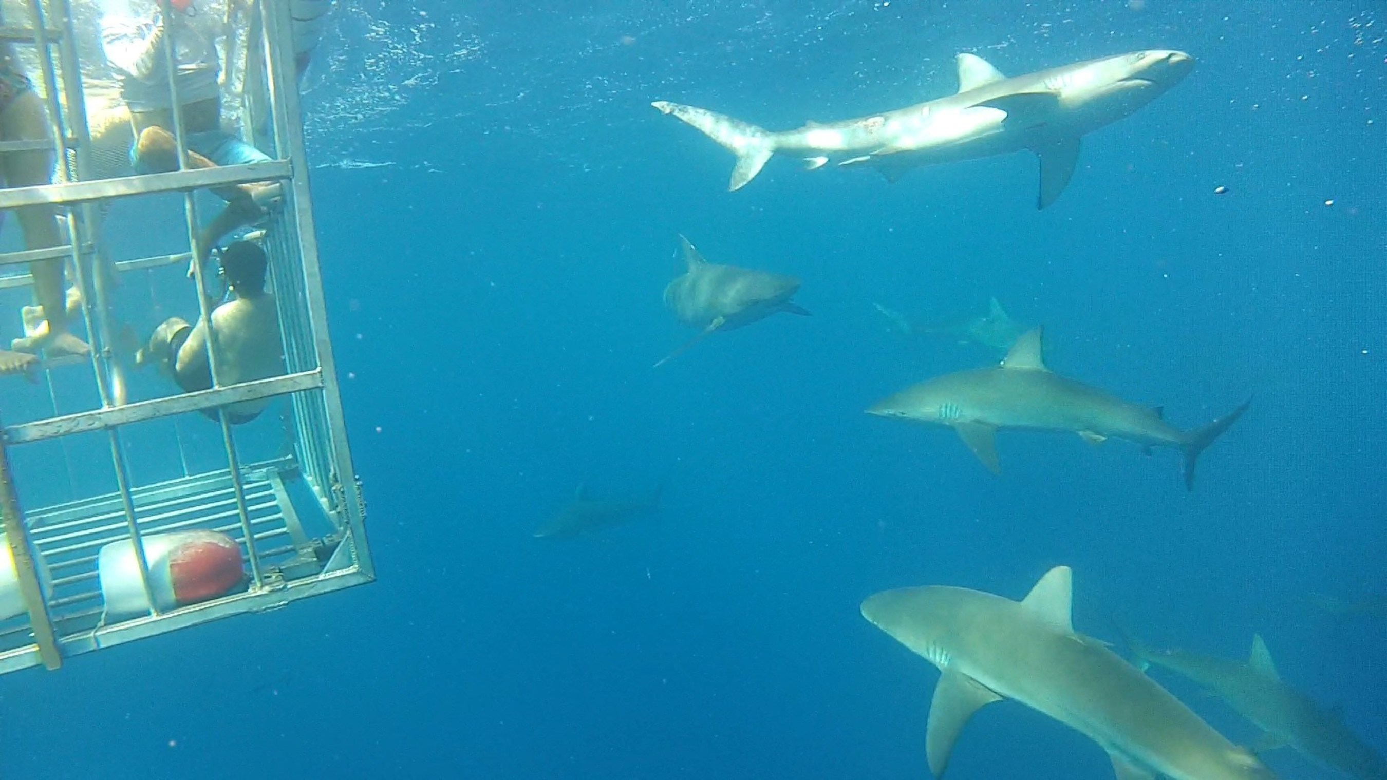 Wounded veterans swim with sharks off Haleiwa, Hawaii