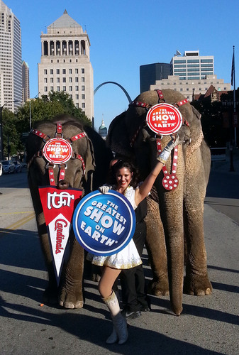 Elephants represent good luck and that must be true, because the Ringling Bros. and Barnum & Bailey elephants ...