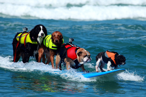 Warning! Some Girl (Dogs) Will Surf Topless at 5th Annual Surf Dog Surf A Thon!