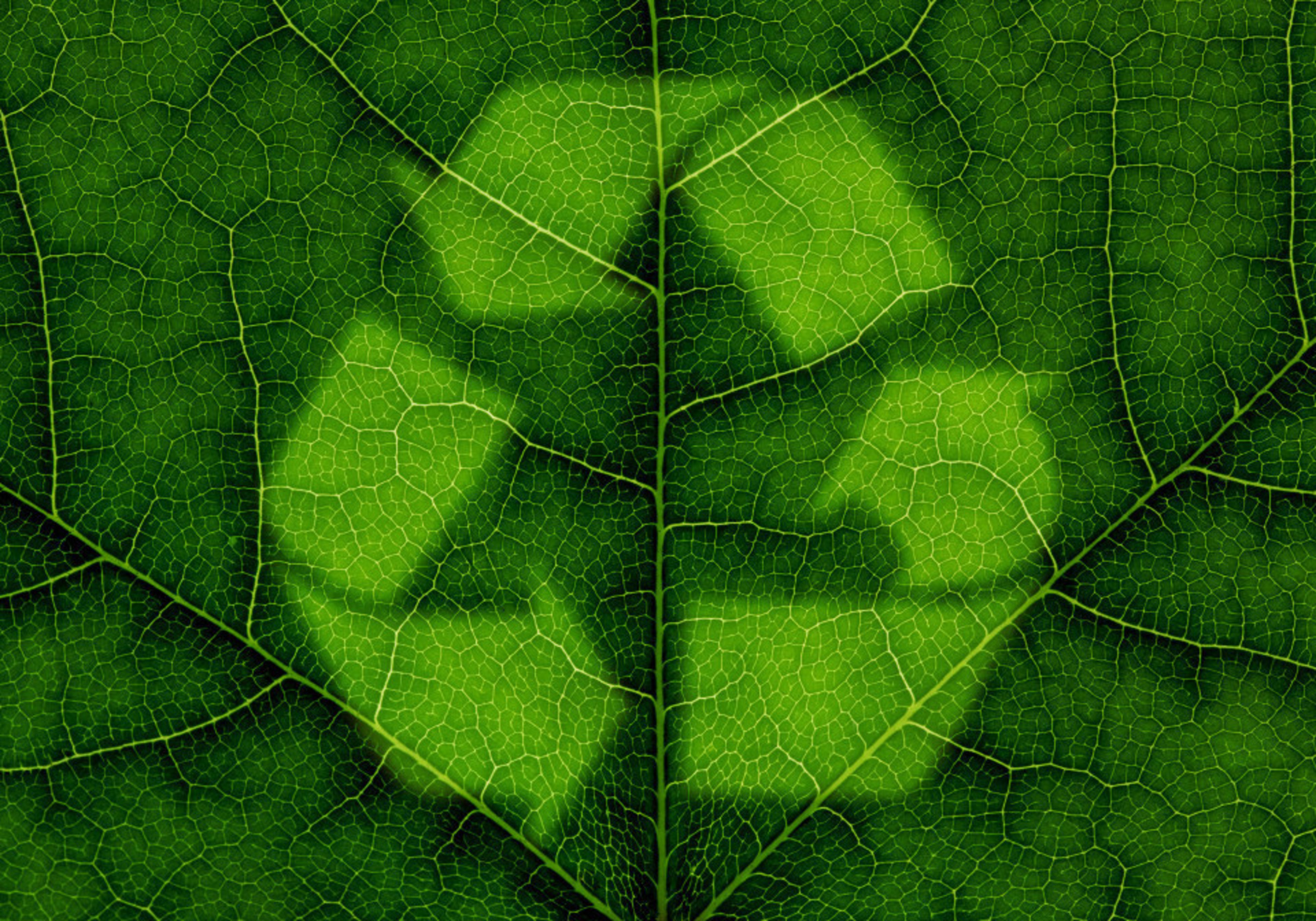 Food and Pharma Demand for Green Packaging Transforms the Flexible Packaging Coatings Market
