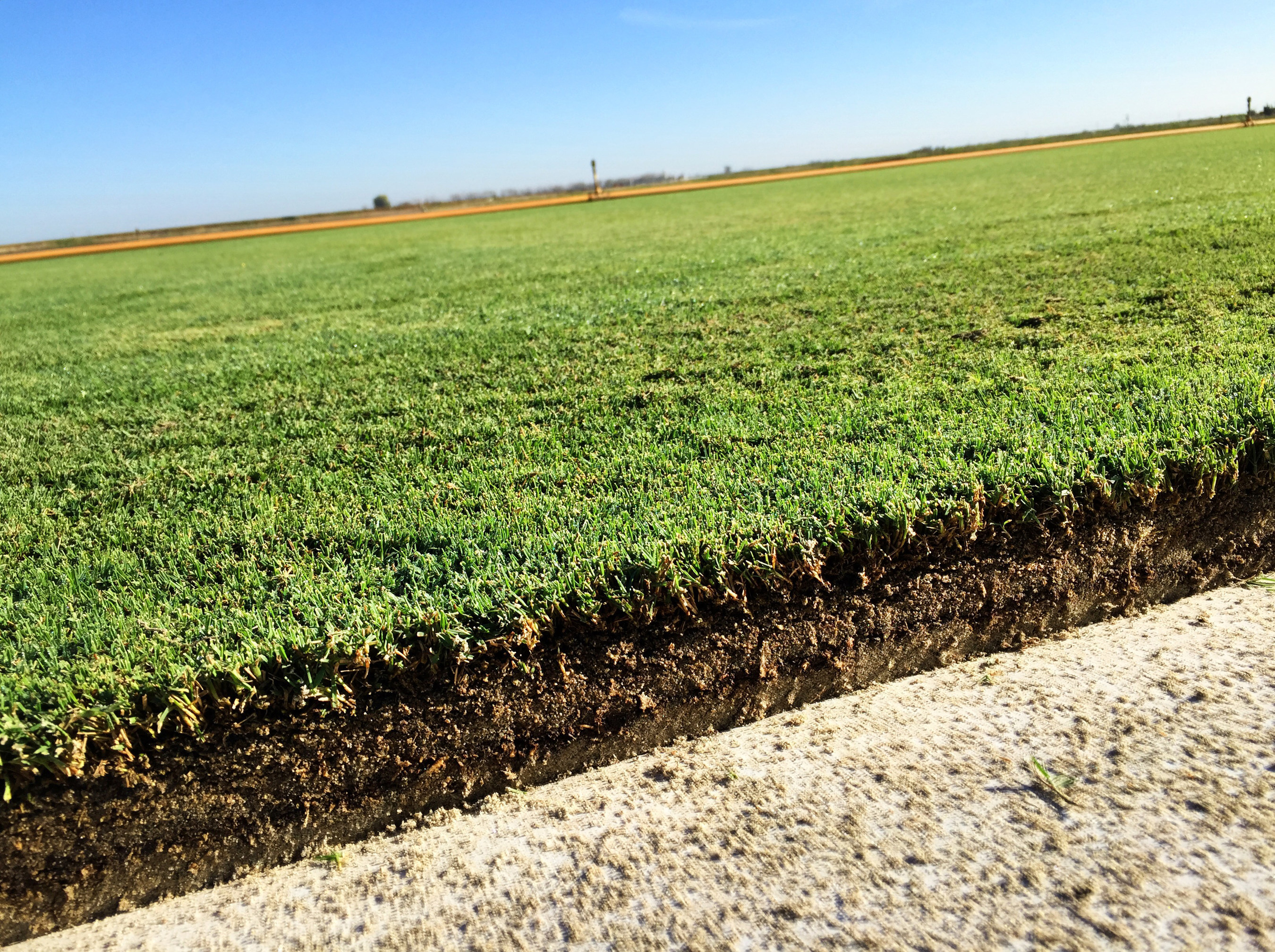 West Coast Turf S New Proprietary Sod Product Going To Super Bowl 50 At Levi Stadium