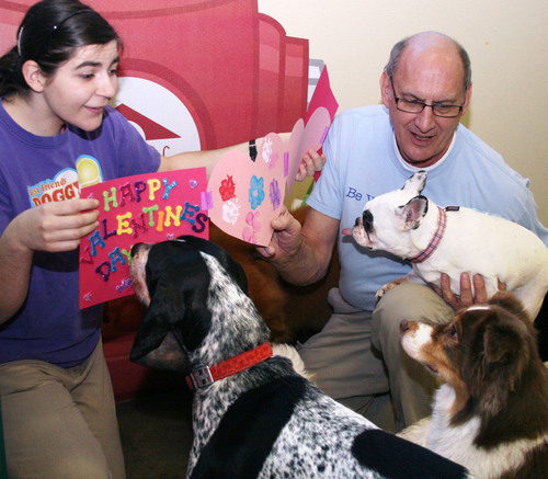 Doggy campers at Best Friends Pet Care in Chicago admire the colorful paw-print Valentine card they created and  ...