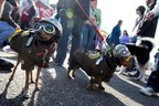 Big Daddy and Senor Chewy prepare to march in the 2015 Beggin' Pet Parade