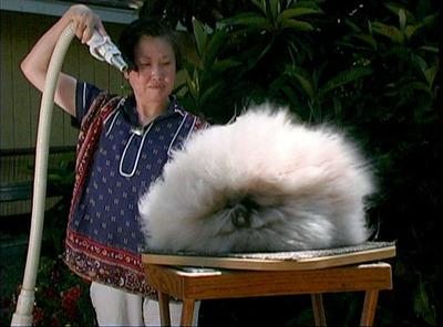 Rabbit Fever.  (PRNewsFoto/Amy Do)