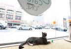 Cat lounges by the window at the new Cat Cafe by Purina ONE in New York. (PRNewsFoto/Purina ONE)