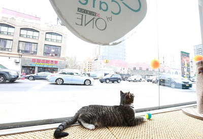 America's First Cat Cafe Now Open In New York