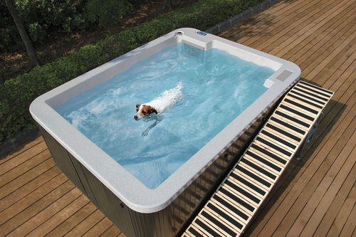 Jack Russell Jessie enjoys a restorative hydrotherapy session in the DoggySwim S290 self-contained relocatable canine hydrotherapy pool (PRNewsFoto/Riptide Pools)