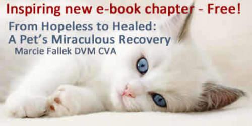 Beau was scheduled for euthanasia when Dr. Fallek was consulted. (PRNewsFoto/Dr. Marcie Fallek)