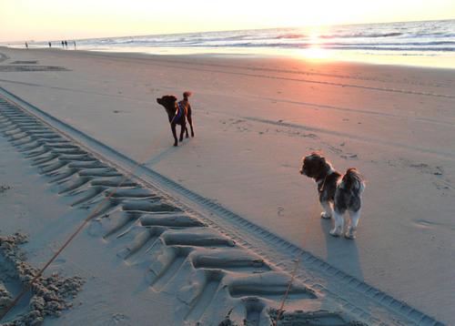 TripAdvisor Announces America's Top 10 Properties for Jet-Set Pets