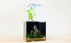 2 immigrants create a window to nature for the masses. The EcoQube C is a desktop ecosystem and the lowest maintenance aquarium ever! You NEVER have to change the filter because it uses natural PLANTS to filter the water! http://kck.st/1yu2hlY