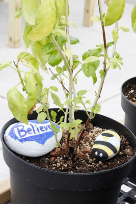Painted rocks decorate a basil plant cared for by Special Tree clients.