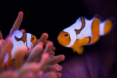 """Nemo and Marlin for The J Collections' """"Finding Dory"""""""
