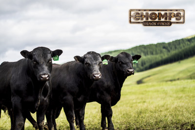 Chomps' Grass-Fed Angus Cattle roam free in this green New Zealand pasture.