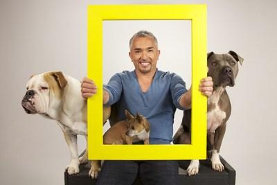 HITN-TV new programing for September will include series with the popular 'dog whisperer',  Cesar Millan