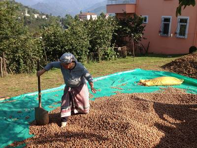 (R)UTZ Certified - Woman drying hazelnuts on her small farm in Trabzon, Turkey