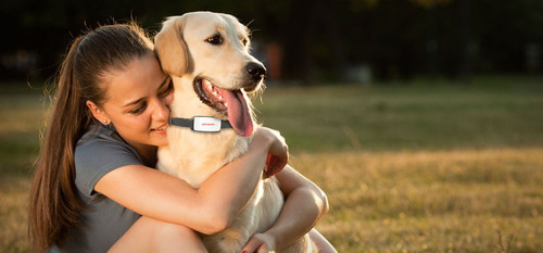 Gibi, A Pet GPS Location Service, Launches Indiegogo Campaign