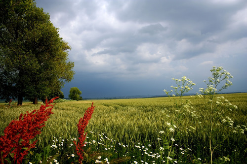 Extreme weather last year may spell stronger and longer troubles for people with allergies his spring. Visit ...