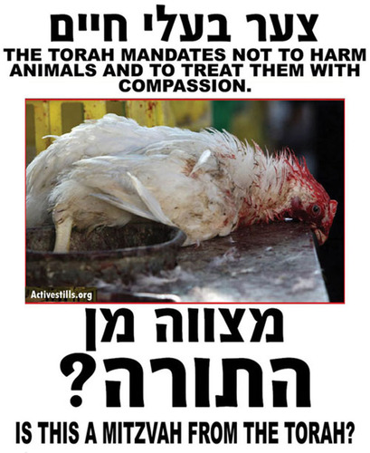 The Torah mandates not to harm animals and to treat them with compassion. Is this a mitzvah from the Torah?  (PRNewsFoto/United Poultry Concerns)