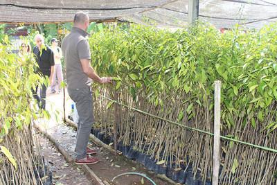 Sebastien Gouspillou, Development Manager Europe - getting close with Aquilaria tree saplings (PRNewsFoto/Asia Plantation Capital)
