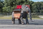 Wendell, the life-size mechanical elephant, is up for sale this weekend at Auctions America's Auburn Fall Collector Car Weekend. A Labor Day Weekend tradition spanning 45+ years, the event - held at Indiana's historic Auburn Auction Park - brings thousands of enthusiasts to the Classic Car Capital of America. Joining a roster of more than 900 collector cars, Wendell is set to make a big splash at this weekend's sale where he is expected to fetch more than $250,000. A portion of proceeds from his sale will benefit Kate's Kart, a Northeast Indiana not-for-profit organization. More: www.auctionsamerica.com, www.kateskart.org.