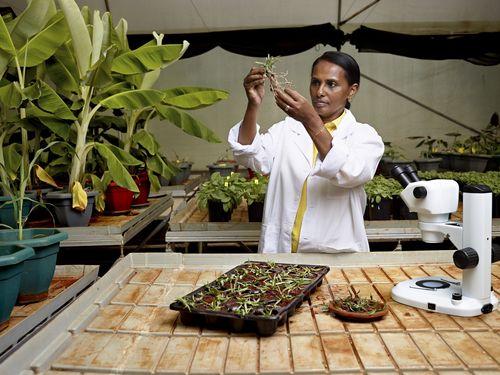 Doctor Segenet Kelemu, Laureate for Africa and the Arab States/ Docteur Segenet Kelemu, Lauréate pour l'Afrique et les Etats Arabes - © Julian Dufort (PRNewsFoto/L'Oreal; UNESCO)