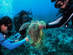 Three biologists on a coral reef survey work to free a green sea turtle entangled in a fishing net, Tamuning, Guam. Photo (c) David Burdick / Marine Photobank