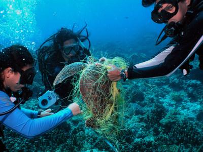 Three biologists on a coral reef survey work to free a green sea turtle entangled in a fishing net, Tamuning, Guam. Photo (c) David Burdick / Marine Photobank