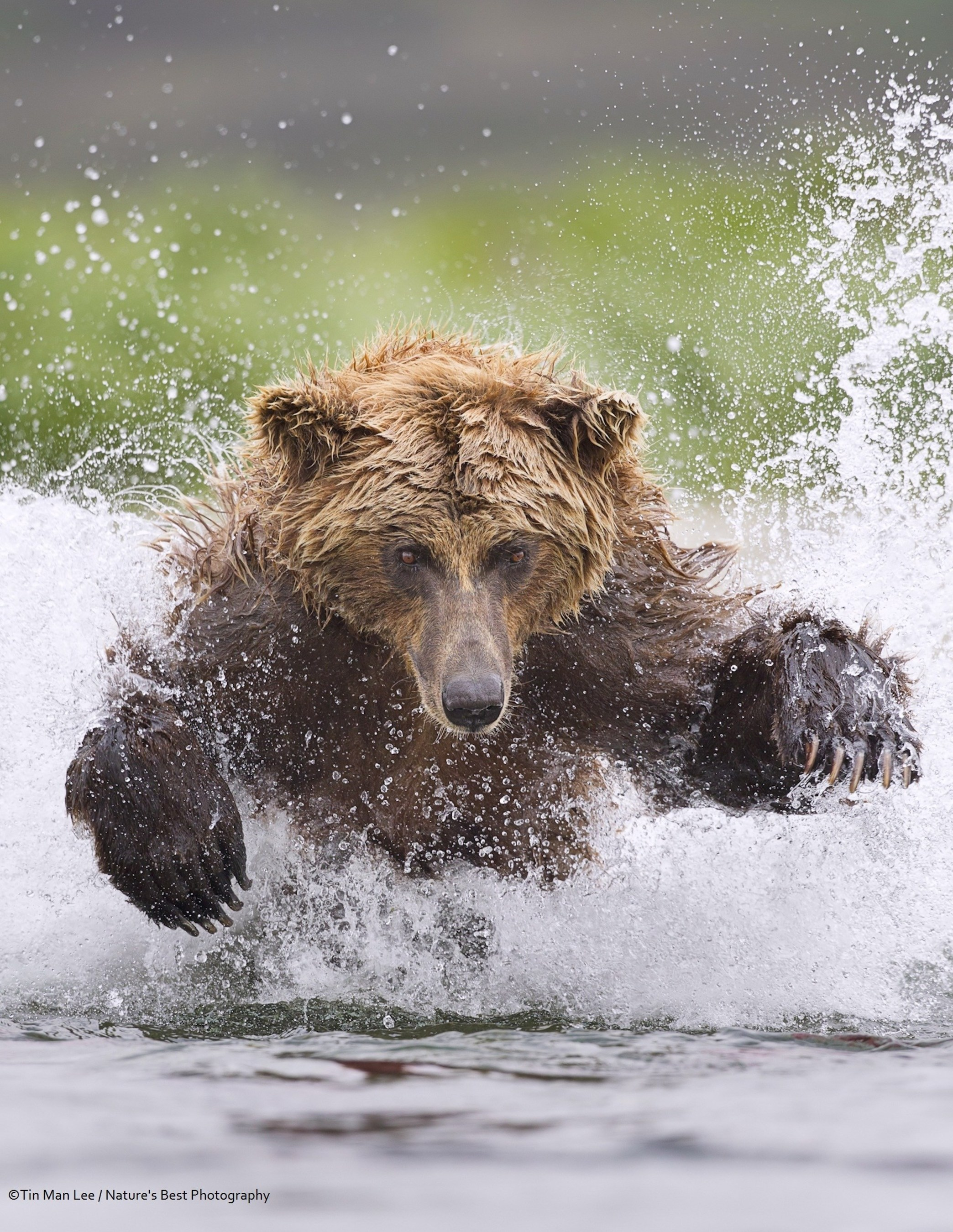 Epson Sponsors Nature's Best Photography Awards For Third