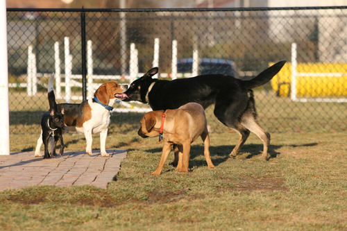 PetSafe Invites U.S. Cities to 'Bark for Your Park'