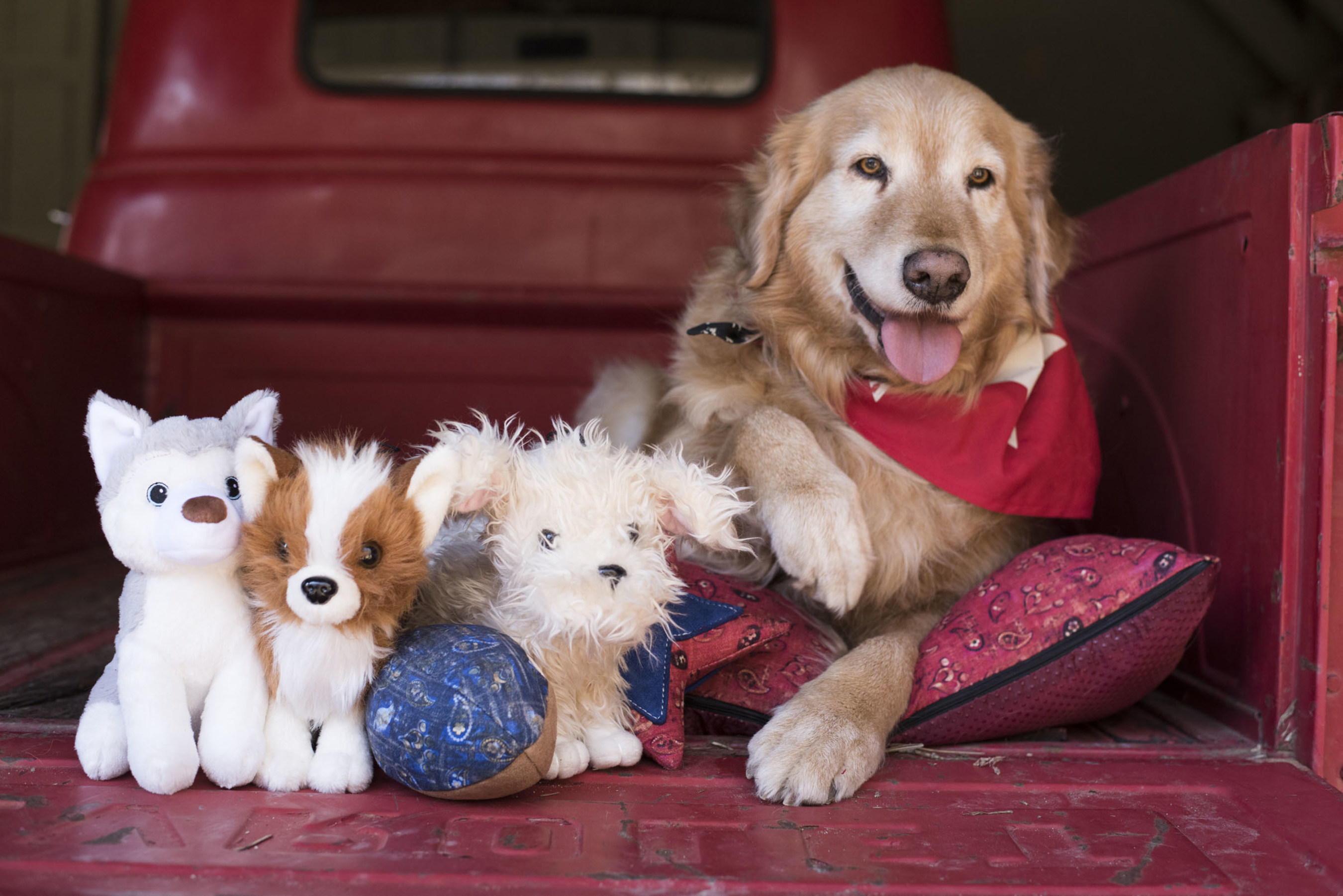 Waylon with Rescue Mutts