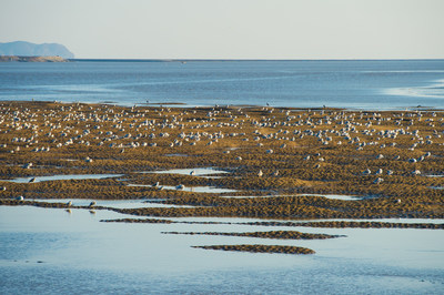 The Dandong Yalu River Estuary Wetland is of great importance as a feeding and resting area for hundreds of thousands of the world's migrating and wading birds.