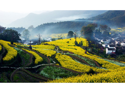 Beautiful homes and the surrounding terraced fields. (PRNewsFoto/Jiangxi Wuyuan Tourism Co., Ltd.) (PRNewsFoto/JIANGXI WUYUAN TOURISM CO., LTD.)