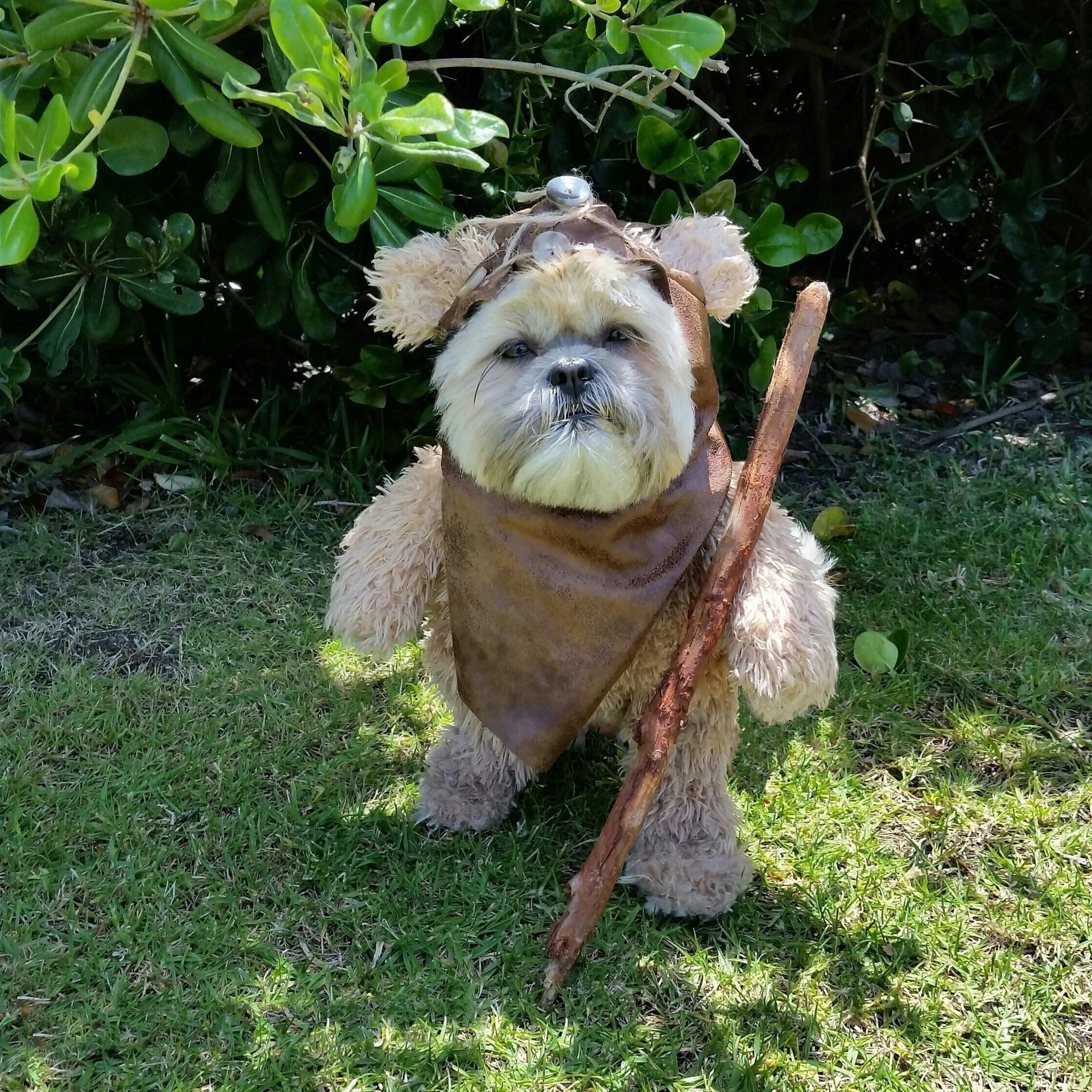 Dog Munchkin Dressed as an Ewok; munchkintheteddybear (You Tube);@munchkintheteddybear (Instagram)