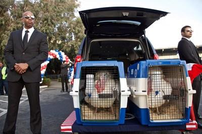 Presidential Turkeys
