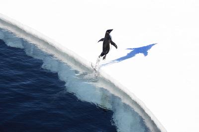 Adelie penguin in the Ross Sea, Antarctica. Credit: John B. Weller. (PRNewsFoto/The Pew Charitable Trusts)