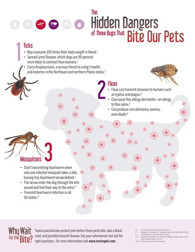 Why Wait for the Bite is a campaign to educate pet parents about the dangers of bug bites and how to protect their pets. A new survey shows by a nearly 9-1 margin, dog owners prefer topical medications squeezed from a tube to protect their pet before the bug bites vs. beef-flavored oral treats that only kill fleas and ticks after these pests bite and feed on the blood of their dogs. See your veterinarian and learn more about how to protect your pet at  www.vectrapet.com . (PRNewsFoto/Ceva Animal Health) (PRNewsFoto/Ceva Animal Health)