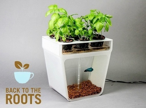 The Home Aquaponics Garden from Back to the Roots.  (PRNewsFoto/Back to the Roots)
