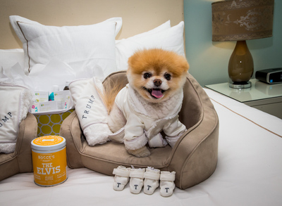 "Trump International Hotel(TM) Las Vegas is celebrating National Pet Month with a special ""Dogs Days of Summer"" promotion. Pomeranian sensation and ""The World's Cutest Dog,"" Boo and his friend Buddy helped kick off the summer-long celebration. Photo by Erik Kabik. (PRNewsFoto/Trump International Hotel Las...)"