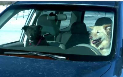 "Subaru is ""Dog Tested. Dog Approved"". Pledge today to walk your dog on Super Sunday at Subaru.com or Facebook.com/SubaruofAmerica.  (PRNewsFoto/Subaru of America, Inc.)"