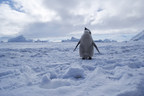 Antarctic Ocean Alliance Calls for Overdue Southern Ocean Conservation Commitments