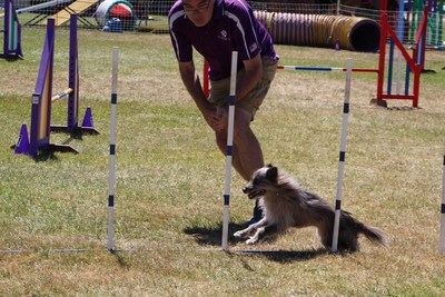 Ashley Deacon and Dash, the 2016 Grand Prix of Dog Agility World Champions, race through the weave poles at the Cynosport World Games earlier this month.Photo credit: Sarah Hintzeman