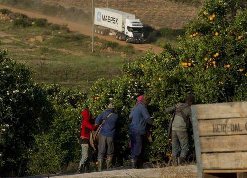 Seaborne reefers overtake food transports from air freight (PRNewsFoto/Seabury)