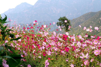 Tourism: Key to Laishui's Development